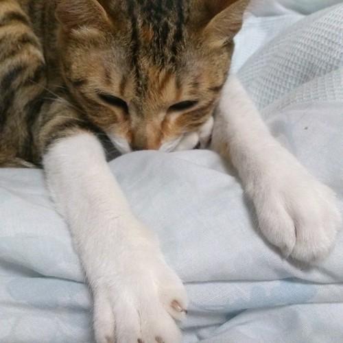 足の上に顎を置いて、手はのび〜。変な格好 by Chinobu