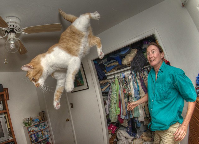 Bubby the Wonder Cat loses his grip on terra firma