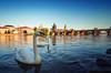 Swan's Bridge by Philipp Klinger Photography
