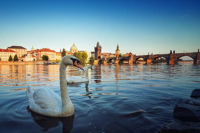 Swan's Bridge