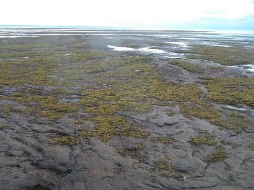 Low tide at Camp Buchan, Belfast, Prince Edward Island (7)