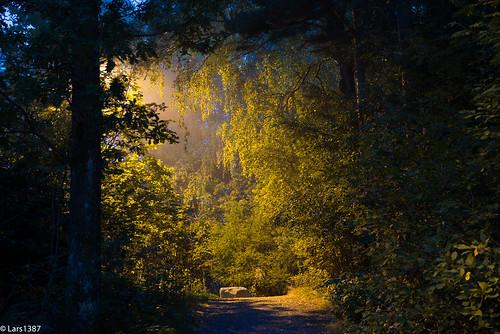 longexposure morning trees tree nature norway fog nikon quiet sandefjord