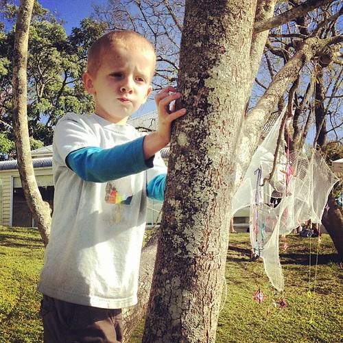 Climbing trees. #bundanon #riversdale #niteworks