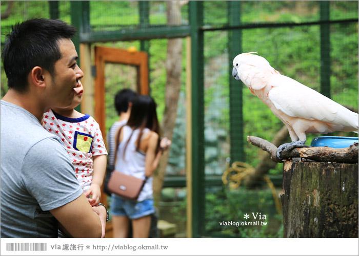 【新竹景點推薦】森林鳥花園~親子旅遊的好去處!在森林裡鳥兒與孩子們的樂園51