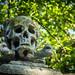 Small photo of Skull and Crossbones