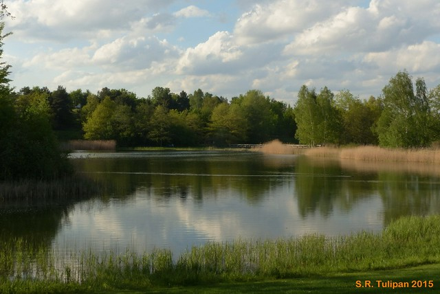 Britzer Garten Tulipan 06.05.2015  43
