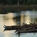 Sras srang chicos en barcas