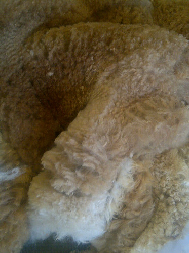 Fawn Alpaca Fleece