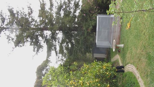 MVI_1768 Asplundh trim redwood trim away fr Edison lines
