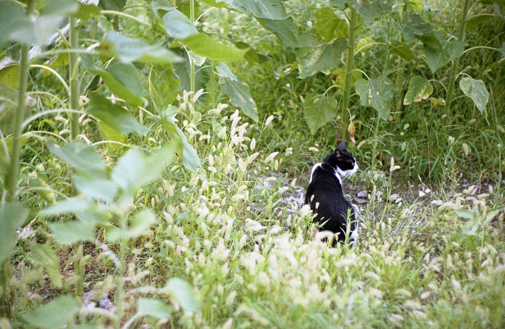 空き地の黒白猫