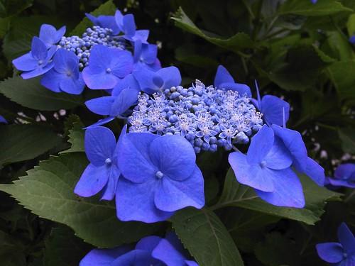 Fantastic blue !  (RICOH GR-DIGITAL II)