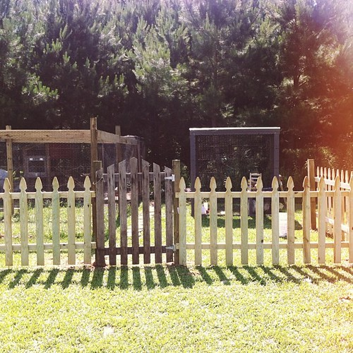 what I got for my anniversary. a picket fence around my chicken pen. I love it so much!