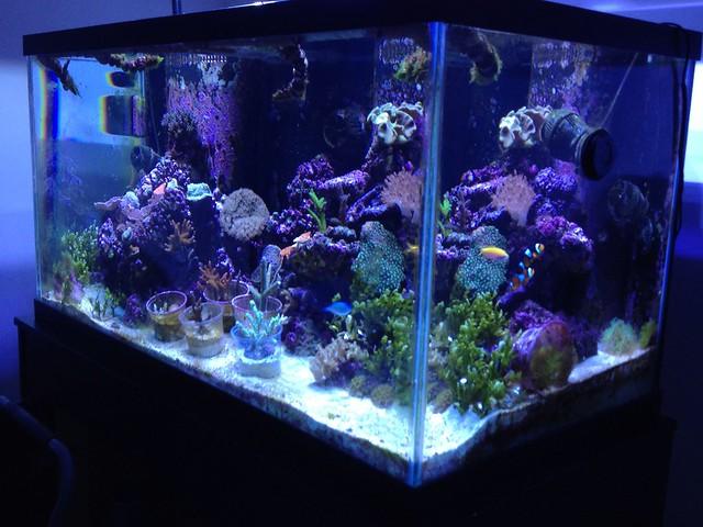 My 120 gallon reef aquarium Flickr - Photo Sharing!