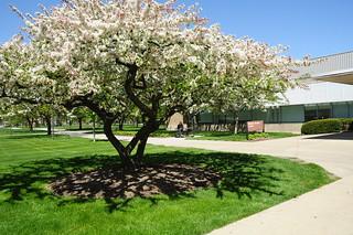 summer-campus024