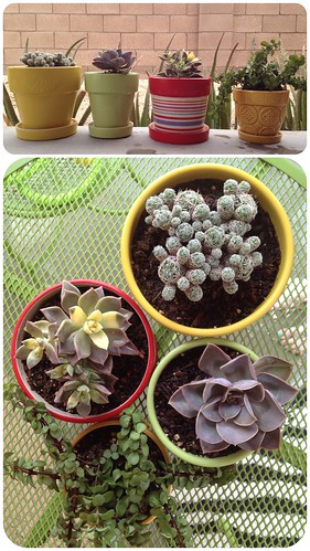 potted succulents by ceck0face