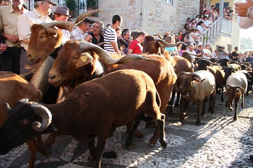 romaria das ovelhas