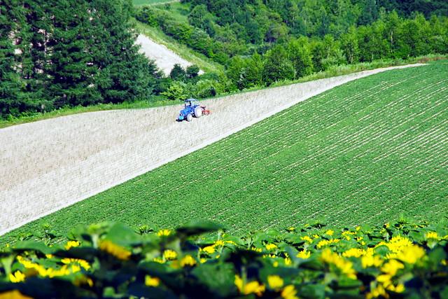 四季彩の丘1