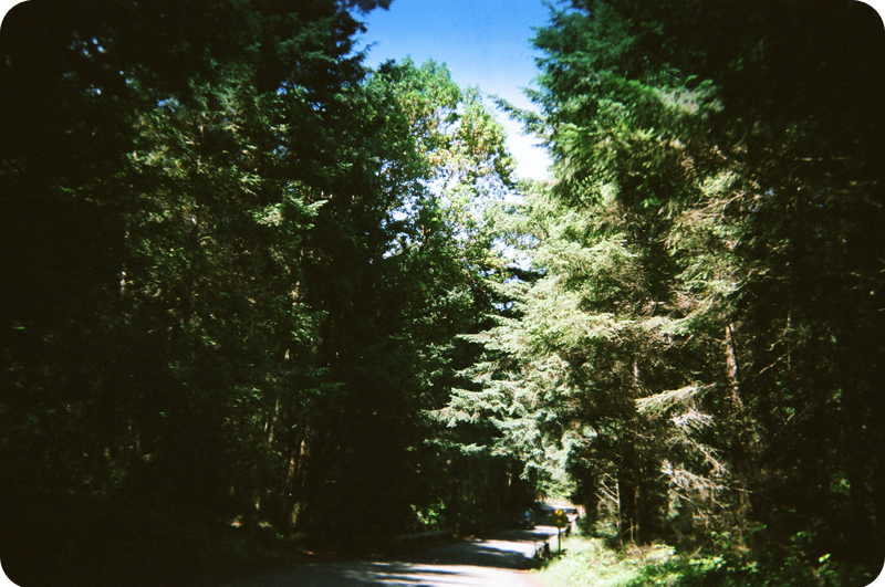 {disposable camera} beach bound | driving through the campgrounds