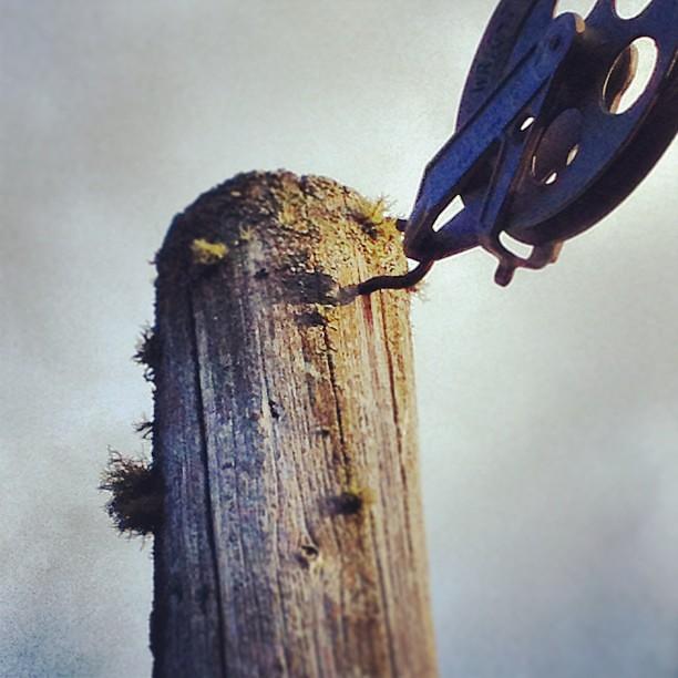 mousse su l p 244 teau de corde 224 linge explore alexandre lem flickr photo