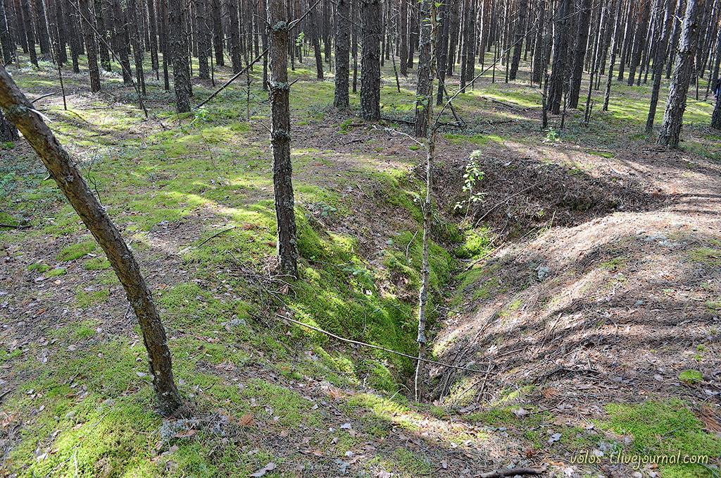 вас гремела леса тверской области фото окопов позволит сделать