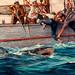 ... shark - bait! by x-ray delta one