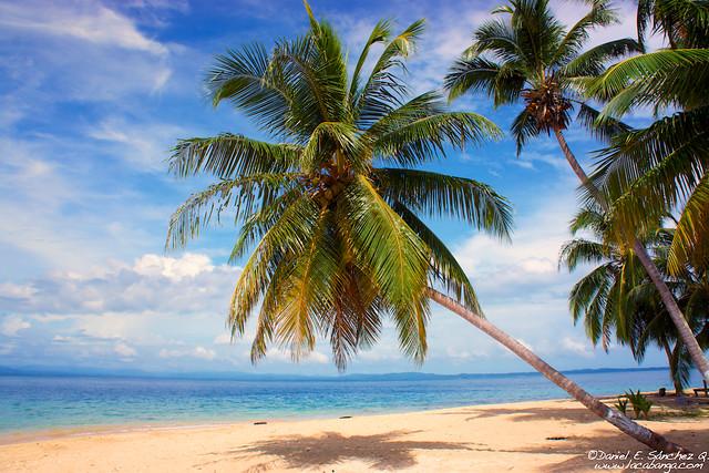Palmas y playa