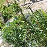 Growing veggies!