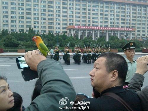广场上的鹦鹉