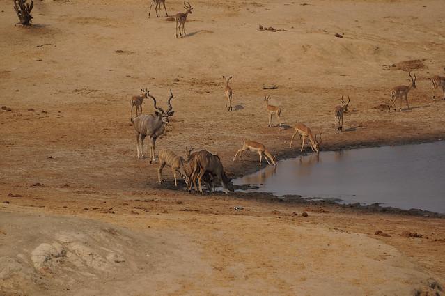 Kudu with Impala