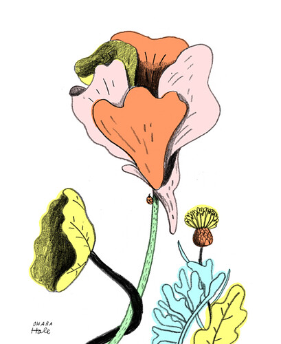nasturtium by Ohara.Hale