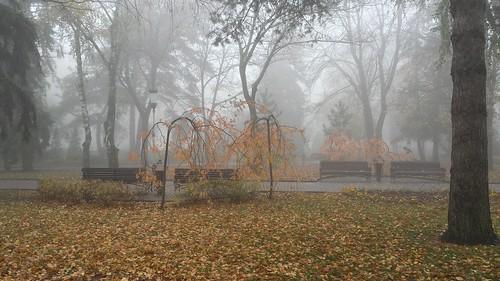 park autumn fog russia stavropol осень туман ставрополь