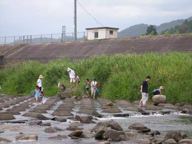川に入り,魚を見つけたり,オオサンショウウオの捜索をしたりとそれぞれに調査開始!