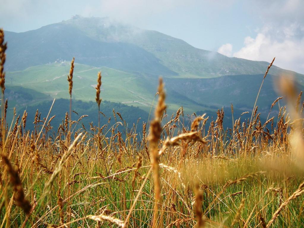 4. Pradera de montaña en los Apeninos modenenses. Autor, Juri Fontana