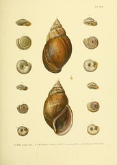 animal(0.0), clam(0.0), food(0.0), escargot(0.0), sea snail(1.0), molluscs(1.0), snail(1.0), seashell(1.0),