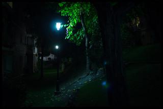 The Enchanted Backyard