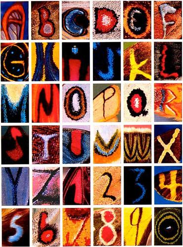 Alfabeto mariposa por Kjell Sandved