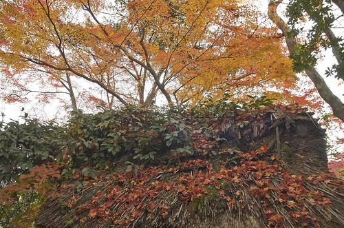 【写真】2013 紅葉 : 白沙村荘/2020-12-28/IMGP3689