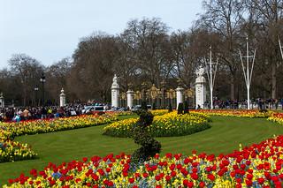 Parterres de fleurs devant Buckingham Palace