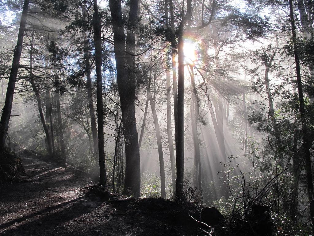 17. Luces en los bosques patagónicos. Autor, Mariano Draghi