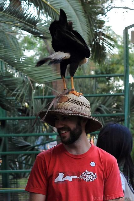 bird on my head