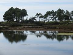Les étangs des Quinconces, Andernos-les-Bains, Bassin d'Arcachon, Gironde, Gascogne, Aquitaine, France.