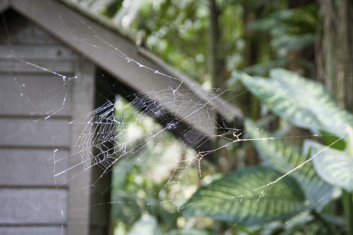 sarang labah-labah
