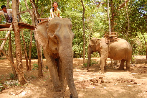 Elephant Nature Park 11