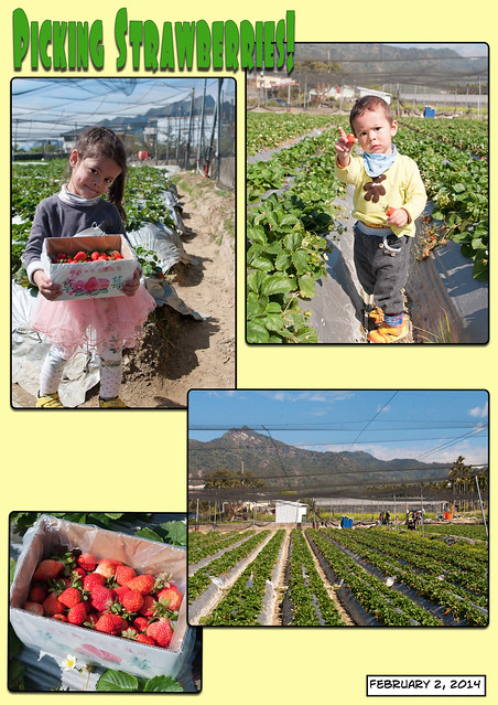 Strawberry Farm Trip