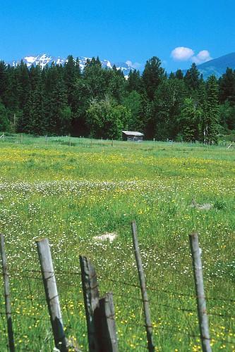 Scenery near Jaffray, BC Rockies, Kootenay Rockies, British Columbia, Canada