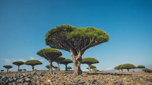 Left my heart in Socotra.