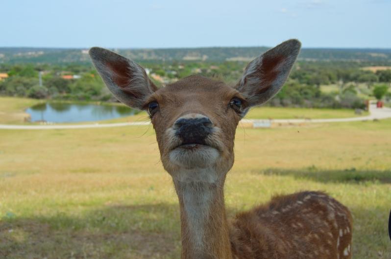 lara-vazquez.-madlula-blog-bambi.safari-madrid