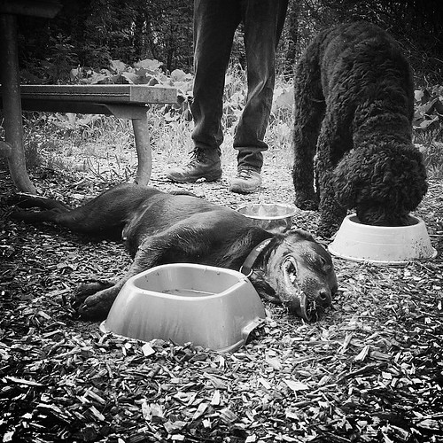 Millie at the water dish