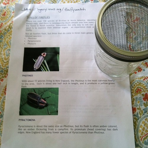 Loving this #fireflywatch info and homemade bug catcher my ds8's Cub Scout den mom sent home! #cubscouts #natureforkids