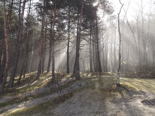 mist forest sand lithuania